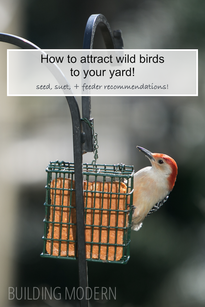 How to attract wild birds to your yard