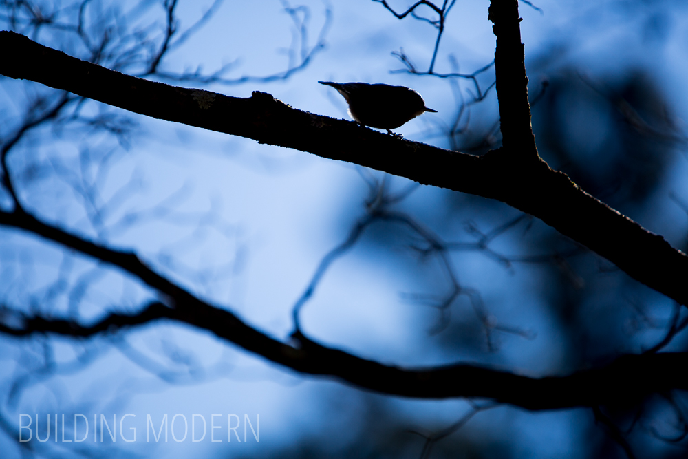 bird silhouette on tree winter