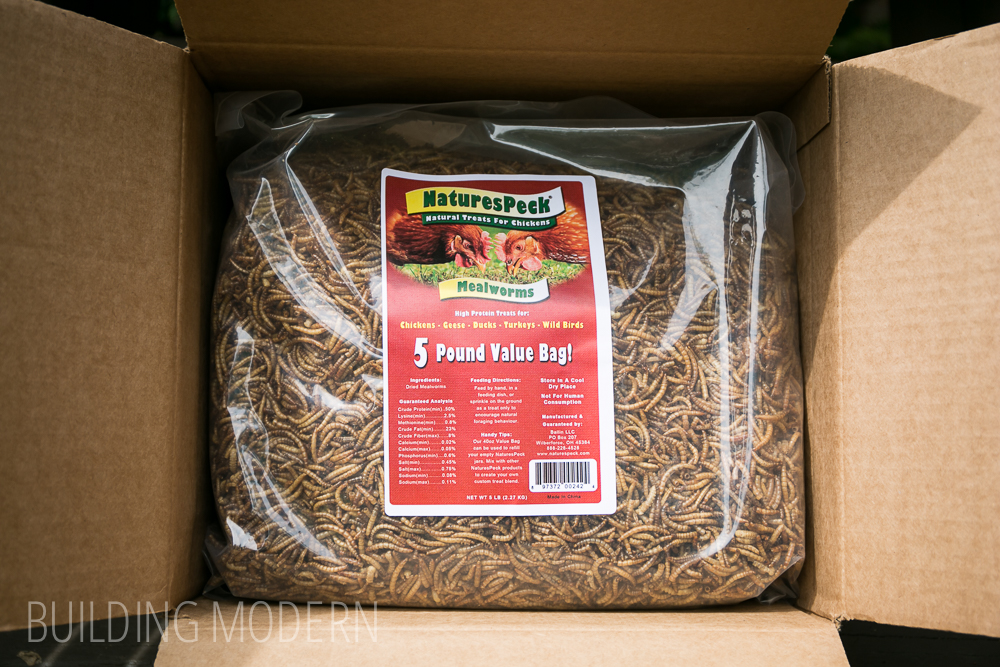 dry mealworms for birds